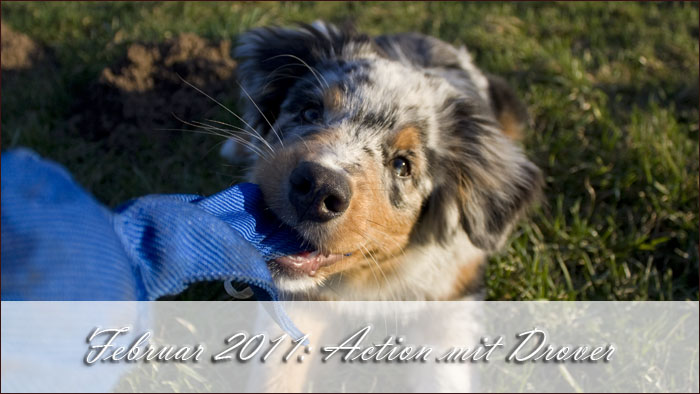 2011-02-action-drover