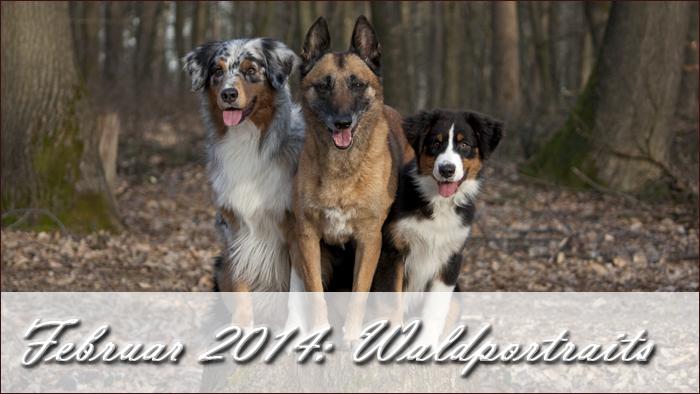 2014-02-waldportraits