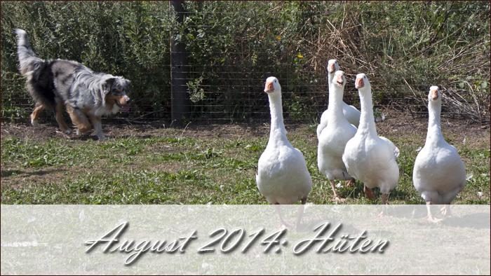2014-08-hueten