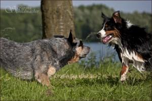 jack_hunde2
