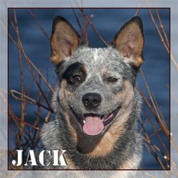 jack_start