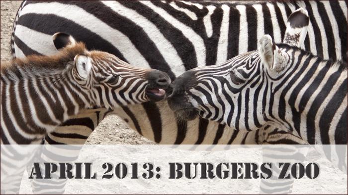 start_burgers_zoo