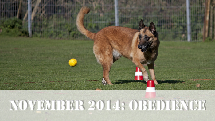 start_obedience2014
