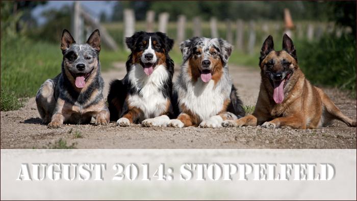 start_stoppelfeld