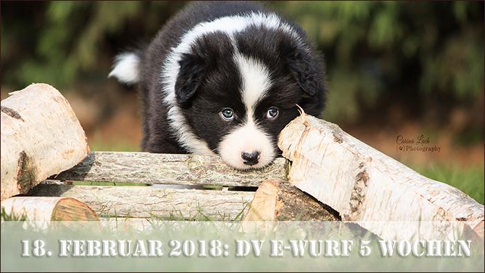 startbild_dv-e-wurf-5-wochen